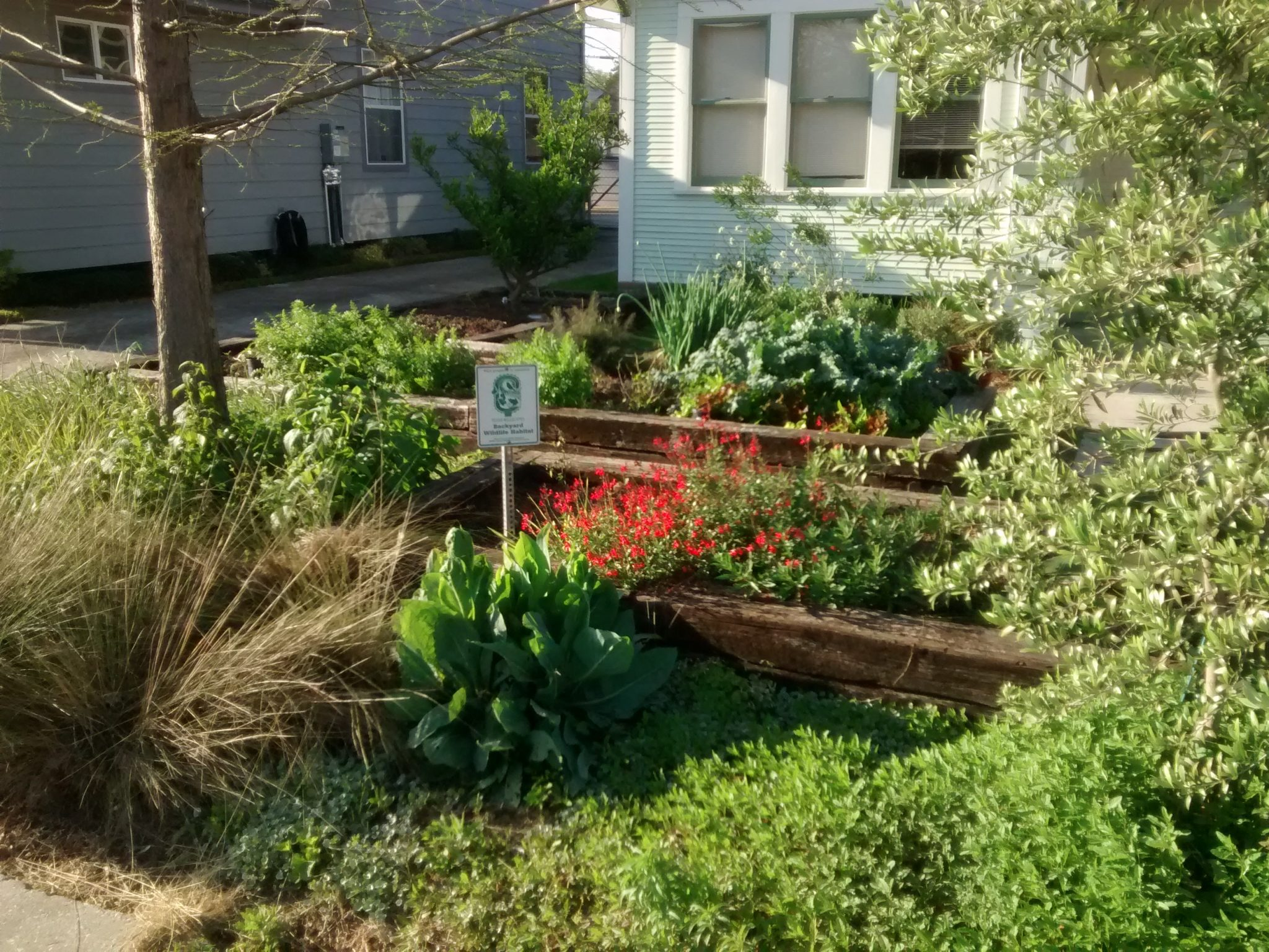 April Yard of the Month: 717 E. 23rd